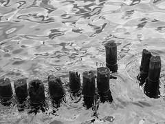 Posts in the Water (Nick Condon) Tags: blackandwhite hakone japan lake moss olympus45mm olympusem10 water wood