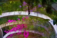 Jardim Botanico Rio de Janeiro (Edgard.V) Tags: brasil brésil brasile brazil rio de janeiro rj jardin botanique garden park giardino parque tropical tropicale fleurs flores flowers fiori arche arch arca