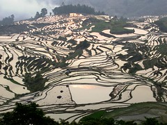 Yuanyang Rice Terraces (D-Stanley) Tags: yuanyang riceterraces duoyishu yunnan china