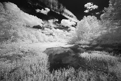 Late Summer by the Cheat (DRCPhoto) Tags: canon5d irconverteddslr infrared digitalinfrared digitalir sigma1224mmdghsm cheatriver westvirginia