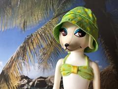 Dog days (Foxy Belle) Tags: peteena poodle dog hat bikini summer beach diorama doll 1960s mod playscale 16 polka dot