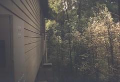 Side of house (Matthew Paul Argall) Tags: kodakbrownieno2 fixedfocus 120film 120 mediumformat lomographyfilm boxcamera meniscuslens
