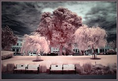 981. A moment in San Francisco #419 - Tree scene 1 (Oscardaman) Tags: colorizedinfrared720mnforinquiresaboutanyofmyphotos pleaseemailmeatoscarwitzgmailcom 981 a moment san francisco 419 tree scene
