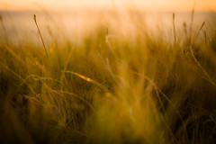 softly......sunrise (tonguedevil) Tags: landscape view outdoor outside countryside summer nature field meadow grass colour light shadows sunlight sunrise