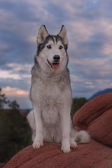 Aurora (Cruzin Canines Photography) Tags: animal animals canon canoneos5ds canon5ds canine 5ds dog dogs pet pets aurora husky huskies alaskanhusky siberianhusky outdoors outside nature naturepreserve gardenofthegods colorado coloradosprings portrait