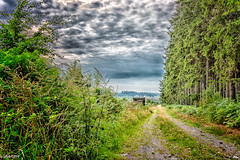 28082019-DSC_0012 (vidjanma) Tags: petitestailles arbres chemin mirador nuages