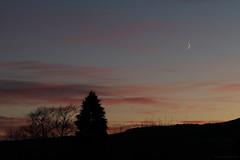 witnesses (birdcloud1) Tags: moonrise moon luna dawn crescent crescentmoon rising canoneos80d eos80d canon70300mm 70300mmlens amandakeogh amandakeoghphotography birdcloud1 risingwithgravityandlevity alwaysamoon