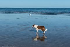 Reflections  - DSC_0322 (John Hickey - fotosbyjohnh) Tags: 2019 august2019 ireland waterford coast seaside seascape sea seashore dungarvan cowaterford