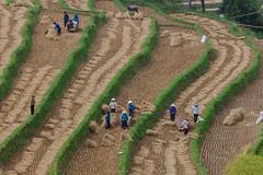 5J5K0611.1009.Tà Lượt.Thèn Phàng.Xín Mần.Hà Giang (hoanglongphoto) Tags: asia asian vietnam northvietnam northeastvietnam northernvietnam landscape scenery vietnamlandscape vietnamscenery xinmanlandscape terraces terracedfields terracedfieldsinxinman seasonharvest people landscapeandpeople canon canoneos1dsmarkiii đôngbắc hàgiang xínmần tàlượt thènphàng ruộngbậcthang ruộngbậcthangxínmần xínmầnmùagặt xínmầnmùalúachín người phongcảnhcóngười mùagặt canonef70200mmf28lisusm