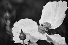 Flower (Thelma Gatuzzo) Tags: natureza usa eua travelphotography travel nature thelmagatuzzo© canoneosr viagem 2019