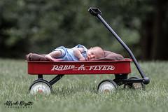 IMG_8234-23322 (alfredo.rossitto) Tags: portrait people sports canon children eyes child sigma 28 70200mm t6i summer newborn baby grass wagon radioflyer