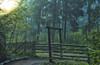 Morning stroll in magical forest...(Explored) (BigWhitePelican) Tags: helsinki finland pitkäkoski gate forest morning mist fog woods canoneos70d adobelightroom6 niktools 2019 august