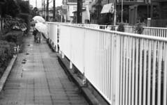 190713_NikonFG20_036 (Matsui Hiroyuki) Tags: nikonfg20 nikonainikkor85mmf20 orientalnewseagulliso100 epsongtx8203200dpi