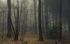 United in Loneliness (Netsrak) Tags: baum bäume eu europa europe forst januar january landschaft natur nebel wald fog forest landscape mist nature tree trees winter woods rheinbach nordrheinwestfalen deutschland