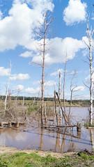 National Park Hoge Kempen (Wildrie) Tags: heide mechelseheide naturephoto nature natuurfotografie natuurpark natuur nationaalpark nationalpark sonya77ii sonyalpha sonya sonya580m1855mm