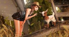 Farm friend (meriluu17) Tags: justbecause glamaffair hextrordinary goat animal cute friend friendly people farm farming barn cowboy cowgirl meeting her sweet pet