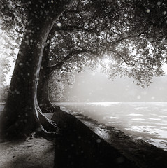 (J.Vergès Photography) Tags: sepia bw hasselblad 500cm lake annecy france analogue trees ilford carlzeiss distagon 40mm water art