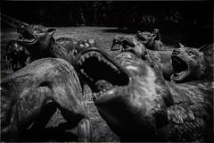 Howling (michael_hamburg69) Tags: schleswigholstein büdelsdorf carlshütte kunst art nordart 2019 liuruowang artist künstler wolf wolves sculpture skulptur wolvescoming