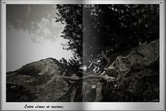 Entre cîmes et racines (Un jour en France) Tags: canoneos6dmarkii canonef1635mmf28liiusm noiretblancfrance noiretblanc forêt racine black
