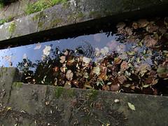 IMG_6127 (belight7) Tags: water way stone leaves stoke poges memorial garden bucks uk summer england stokepoges
