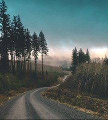 (gunnyretnug) Tags: trees nature outdoors hiking hike pacificnorthwest washingtonstate pnw explorewashington upperleftusa iphone getoutside