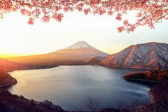 Sunrise over Fuji san mountain and pink sakura (anekphoto) Tags: april autumn nature landscape garden pink cherry blossom flower outdoor snow fujisan mt san volcano fujimountain summer light mount fall famous foliage sunrise travel asia morning japanese mountain japan fuji maple outdoors tokyo scenery kawaguchiko lake background reflection natural sakura landmark season view beautiful scene scenic kawaguchi sky
