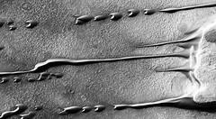 Linear Sand Dunes on Mars, variant (sjrankin) Tags: 30august2019 edited nasa mars marsreconnaissanceorbiter grayscale psp0076761385 sanddunes mesas eroding hellespontusregion 3166mb large