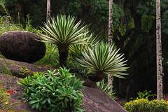 Jardim Botanico Rio de Janeiro 2 (Edgard.V) Tags: brasil brésil brasile brazil rio de janeiro jardin parc parque park giardino botanico tropical