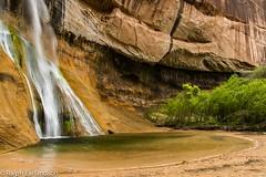 Where the Falls Land (Ralph Earlandson) Tags: grandstaircaseescalante utah desertvarnish waterfall desert coloradoplateau calfcreekfalls