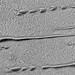 Linear Sand Dunes on Mars, variant