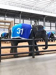 Elephant in Bangkok (delitakusuma) Tags: elephant bangkok thailand asia southeast animal attraction nong nooch iphone 7