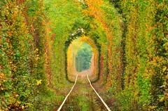 Vẻ đẹp huyền ảo ở đường hầm tình yêu tại Ukraina (quynhchi19102016) Tags: ve may bay gia re di ukraina