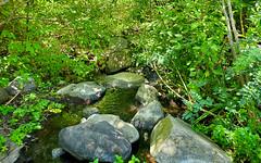 View downstream (ronking1) Tags: julian california unitedstatesofamerica