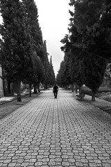 (Paulo J Moreira) Tags: paulomoreira portugal porto pretoebranco fotografiaderua cemitério blackandwhite streetphotography cemetery sonyrx100