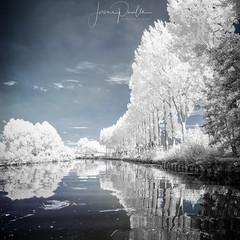 Balade sur la Lys INFRARED (jeje62) Tags: ir irshoot ir720 canal canon digitalinfrared infrared infrared715nm infrarouge landscape lys reflet samyang water
