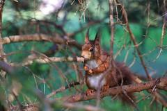Nice to meet you (Nicky@Photography) Tags: nature arbre animal écureuil parc parcdelatêtedor lyon rhône france