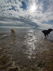 Fast / Slow Challenge (UCD Staff Photography Club) Tags: dogs beach dublin clouds bay sunshine