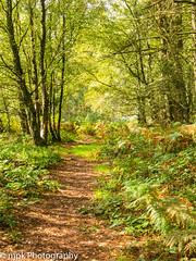 Forest Path (Mick PK) Tags: august bottommoor bracken canon canonpowershotg15 derbyshire eastmidlands england forest green peakdistrict peakdistrictnationalpark places powershotg15 summer tree trees uk woodland footpath path appicoftheweek