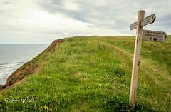SJ1_9199 - The Cleveland Way above Hunt Cliff (SWJuk) Tags: swjuk uk unitedkingdom gb britain england yorkshire northyorkshire yorkshirecoast saltburnbythesea huntcliff signpost clevelandway cliffs trail track footpath grass wildflowers sea seaside seascape coast coastal northsea 2019 jul2019 summer holidays nikon d7200 nikond7200 nikkor1755mmf28 rawnef lightroomclassiccc