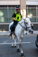 The ancient partnership (jeremyhughes) Tags: london street horse police policeman policehorse equine partnership partners lawenforcement hooves mane saddle bridle horseback urban city cityoflondon nikon d700 nikkor 2470mmf28g