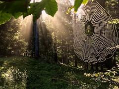 Atmosfera (Fernando De March) Tags: cansiglio foresta tambre belluno veneto atmosfera raggi sole ragnatela ragno mattino