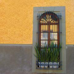window greens (msdonnalee) Tags: ventana window janela fenster finestra fenêtre photosbydonnacleveland photosofsanmigueldeallende mexico mexique mexiko messico méxico colonialmexicanarchitecture pottedplants ウィンドウ окно