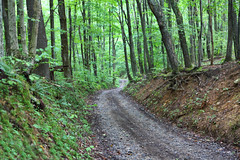 The Road Less Traveled (ashockenberry) Tags: ashleyhockenberryphotography wilderness wild west virginia landscape forest trees deciduous beautiful beauty leaves road country roads gravel travel tourism nature naturephotography natural native majestic mountains light