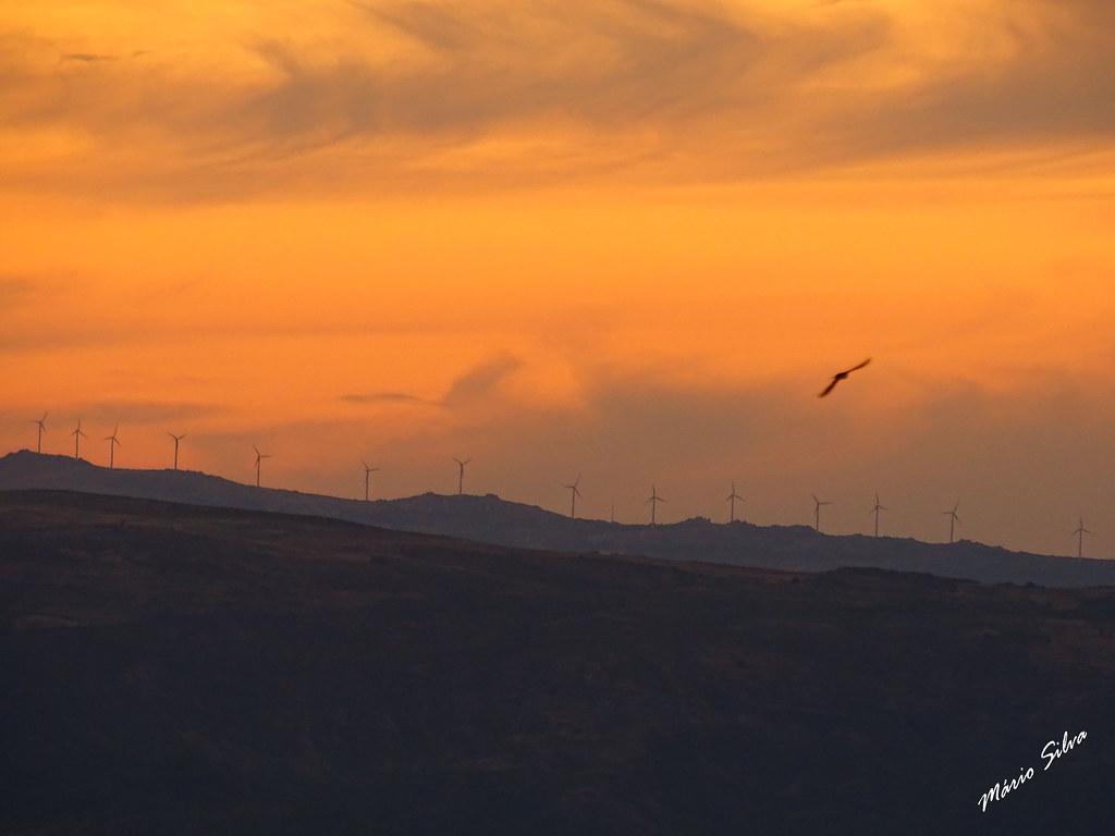Águas Frias (Chaves) - ... pôr do sol e a ave que passa ...