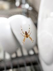 Mr Spider, 30-08-19