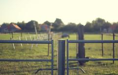 Farm fences (JWH Photography) Tags: hff fence takumar 50mm dof