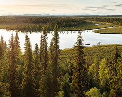 Muddus Nationalpark IV (Gustaf_E) Tags: forest gran jokkmokk kväll landscape landskap lappland muddus muddusnationalpark myr nationalpark norrland pine skog sommar spruce sverige sweden tall tree träd urskog woods