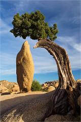 Juniper & Obelisk (Sandra Lipproß) Tags: joshuatreenationalpark california usa juniper tree obelisk rock landscape travel sky blue jumborocks outdoor westcoast unitedstatesofamerica desert desertscape