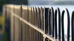 A smart trap.... (beatawozniak1968) Tags: hff fencedfriday fencefriday light cobweb sunlight