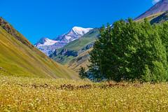 Truso valley, Kazbegi, Georgia (CamelKW) Tags: georgia2019 mtskhetamtianeti georgia trusovalley kazbegi
